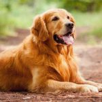 Her köpek sahibinin bilmesi gereken 10 ipucu