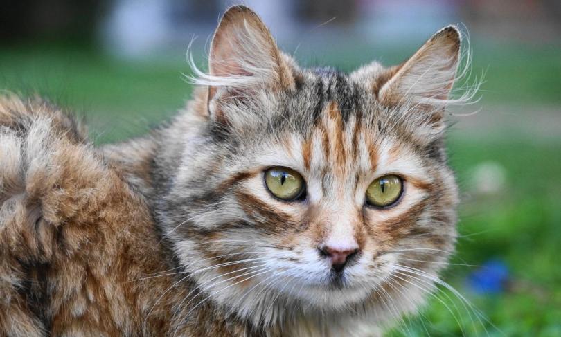 kedi bakımı nasıl yapılır