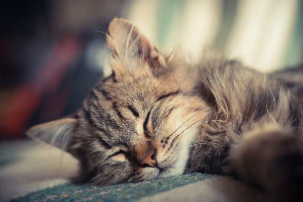 kedi sahiplerine pratik bilgiler