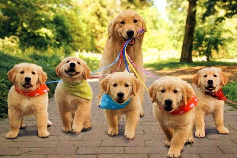 Köpekler Hakkında 40 Bilgi