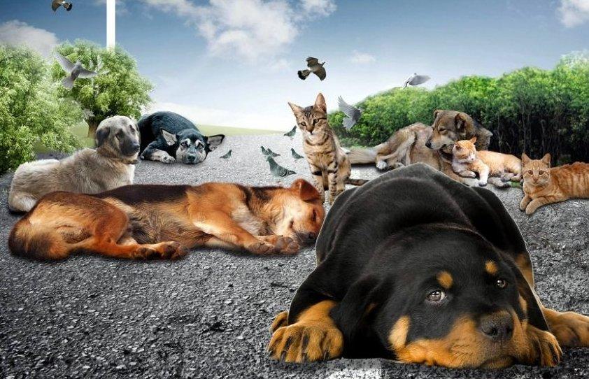 4 Ekim Hayvan Hakları Günü
