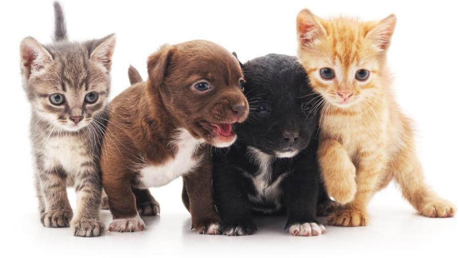hayvan hakları günü